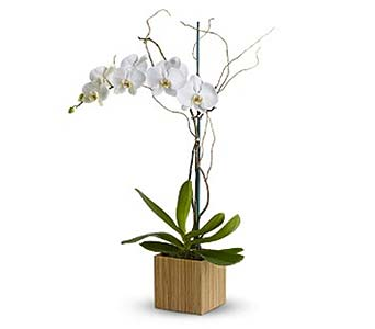 Orchid in Bamboo in Rancho Santa Fe CA, Rancho Santa Fe Flowers And Gifts