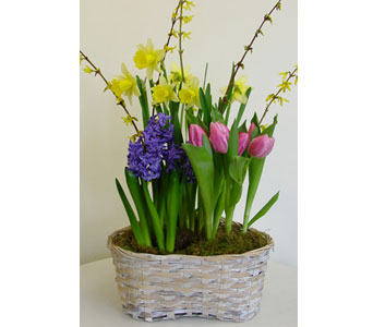 Spring Bulb Basket in Amherst NY, The Trillium's Courtyard Florist