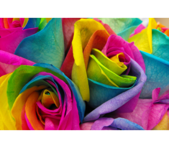 Rainbow Rose in Toronto ON, Simply Flowers