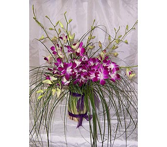 Orchid Delight in Winter Park FL, Apple Blossom Florist