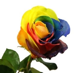 Tye Dye Roses in Big Rapids MI, Patterson's Flowers, Inc.