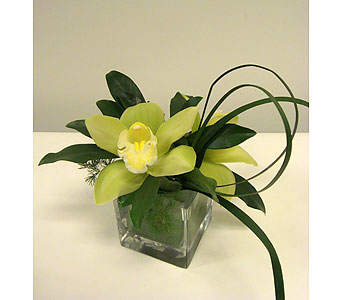 Lime Orchid Treasure in Victoria BC, Fine Floral Designs