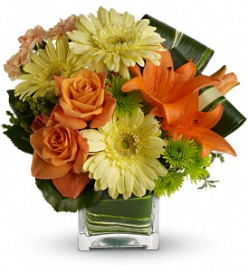 Teleflora's Citrus Crush in DeKalb IL, Glidden Campus Florist & Greenhouse