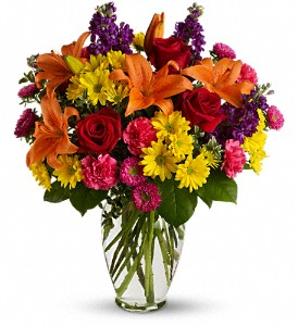 Bright Eyes in Gaithersburg MD, Flowers World Wide Floral Designs Magellans