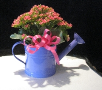 watering can planter blooming in Bismarck ND, Dutch Mill Florist, Inc.