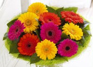 Mini gerbera handtied bouquet in Calgary AB, The Tree House Flower, Plant & Gift Shop