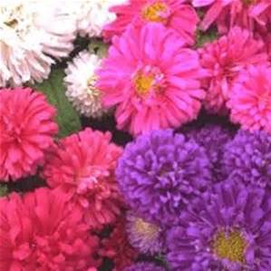 Aster - Pot-N-Patio Mix in Waukegan IL, Larsen Florist
