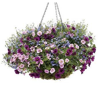 Hanging Basket Combo in Asheville NC, Kaylynne's Briar Patch Florist, LLC