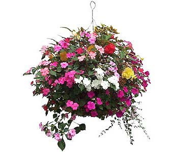 Hanging Basket Deluxe Combo in Asheville NC, Kaylynne's Briar Patch Florist, LLC