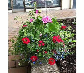 Outdoor Hanging Baskets in Abbotsford BC, Abby's Flowers Plus