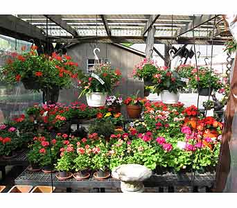hanging baskets, garden pot, garden plants in Blue Bell PA, Country Flower Shoppe