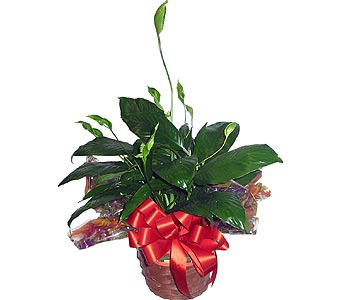 GP02 ''Peace Lily'' in Oklahoma City OK, Array of Flowers & Gifts