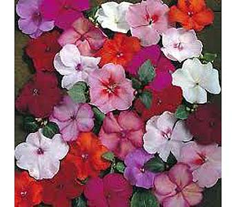 SUMMER PLANTING FOR YOUR LOVED ONE in Medford NY, Sweet Pea Florist