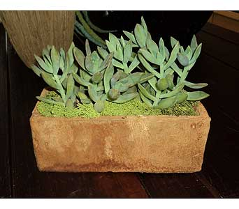 Succulent Planter in Thornhill ON, Wisteria Floral Design