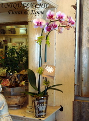 Pink Orchid in Healdsburg CA, Uniquely Chic Floral & Home
