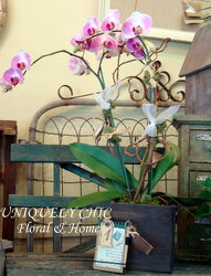Orchid in Healdsburg CA, Uniquely Chic Floral & Home