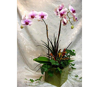 Orchid Series 22 in Lake Forest CA, Cheers Floral Creations