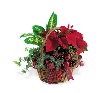 Holiday Planter Basket in Cohasset MA, ExoticFlowers.biz