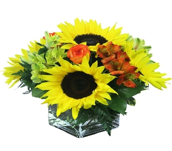 Cheer you up in El Paso TX, Kern Place Florist