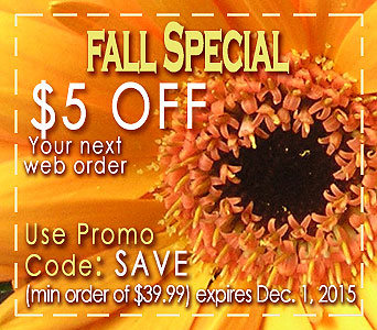 Fall Special in Campbell CA, Citti's Florists