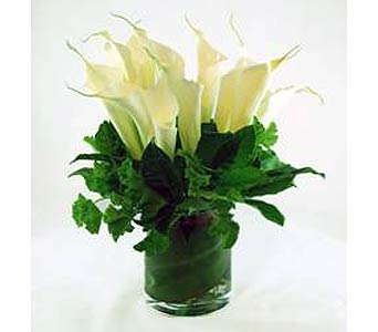 Calla Lily Modern in Campbell CA, Citti's Florists