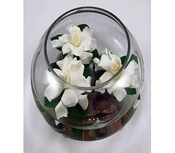 Floating Gardenias in Campbell CA, Citti's Florists