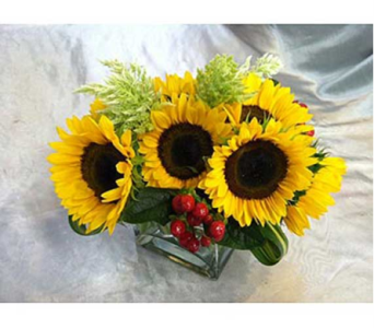 Sunflower Pleasures 1 in Santa Monica CA, Santa Monica Florist