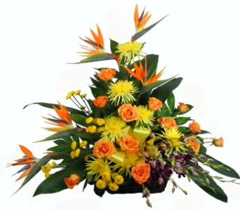 Tropical Paradise Basket in Indianapolis IN, Steve's Flowers & Gifts