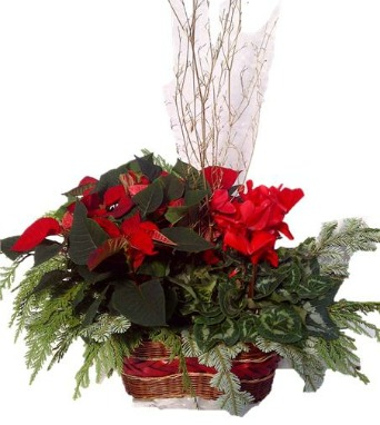 Christmas Duet in basket in Grimsby ON, Cole's Florist Inc.