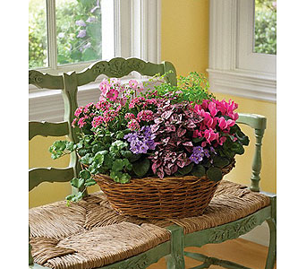 Simply Chic Mixed Plant Basket in Bradenton FL, Ms. Scarlett's Flowers & Gifts