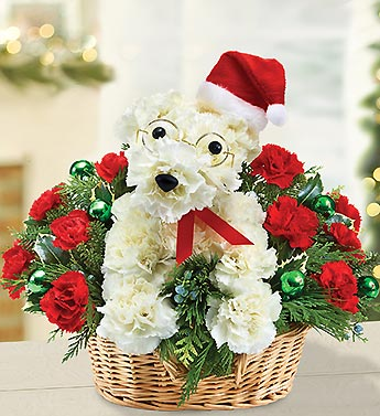 Santa Paws in Bradenton FL, Ms. Scarlett's Flowers & Gifts