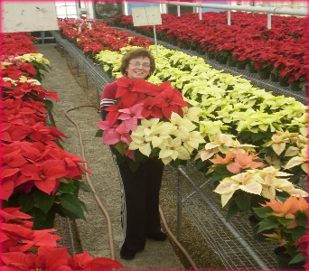 The Beautiful Poinsettias in Hanover PA, Country Manor Florist