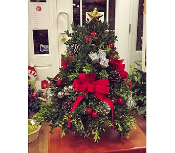 Boxwood Tree in Manhasset NY, Town & Country Flowers