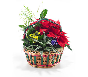Medium Christmas Planter in Georgetown ON, Vanderburgh Flowers, Ltd