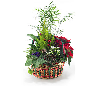 Large Christmas Basket Planter in Georgetown ON, Vanderburgh Flowers, Ltd