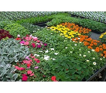 Bedding Plants in Lewistown MT, Alpine Floral Inc Greenhouse