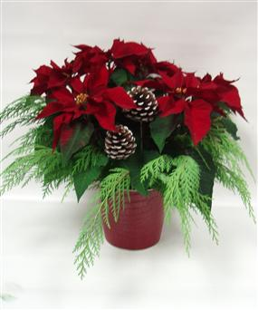 6 RED Poinsettia in Belleville ON, Live, Love and Laugh Flowers, Antiques and Gifts