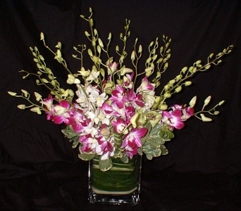 Mixed Orchid Cube in Dallas TX, Z's Florist