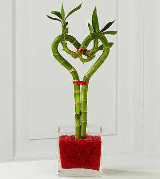 Valentine Bamboo in Guelph ON, Patti's Flower Boutique
