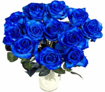 12 Blue roses in Scarborough ON, Helen Blakey Flowers