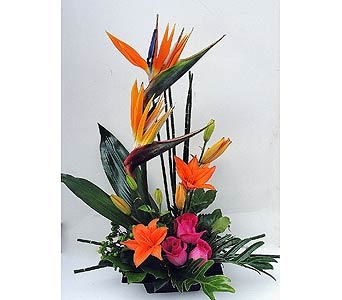 Love's Paradise in Naples FL, Driftwood Garden Center & Florist