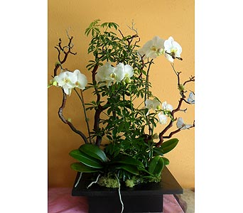 orchid arrangement 30W x 34H in Rowland Heights CA, Charming Flowers