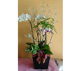 orchid arrangement 40Hx23W in Rowland Heights CA, Charming Flowers