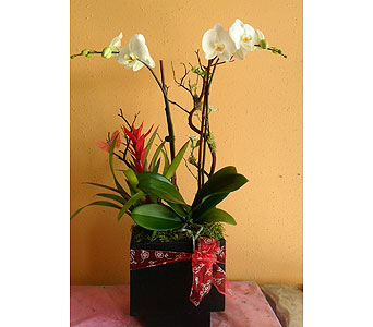 orchid arrangement  27H x16W in Rowland Heights CA, Charming Flowers