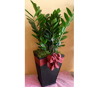 Zamioculcas   30h x13w in Rowland Heights CA, Charming Flowers