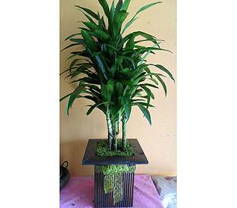 Lisa tree  52h x 23w in Rowland Heights CA, Charming Flowers