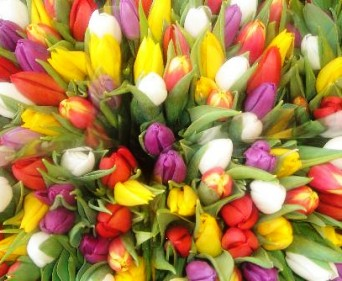 30 Gorgeous Tulips Bouquet (Special Offer) in Cote St-Luc QC, Fleuriste Fleurissimo