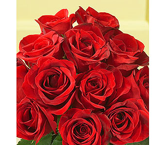 Premium Red Roses in Ajax ON, Reed's Florist Ltd