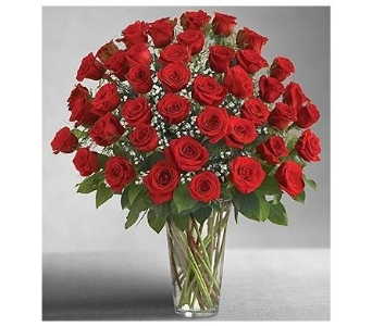 Four Dozen Long Stem Red Roses in Woodbridge VA, Brandon's Flowers
