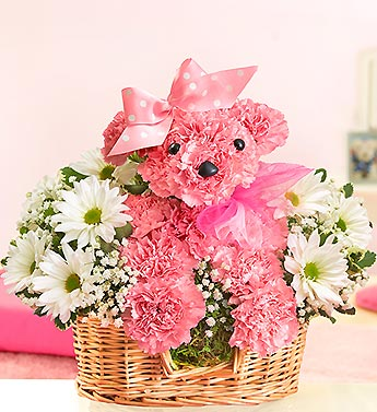 Princess Paws in Bradenton FL, Ms. Scarlett's Flowers & Gifts